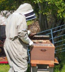 Beekeepersmoker[1]