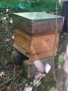 The healthiest, happiest hive.